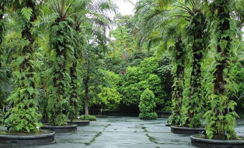 botanic 01
