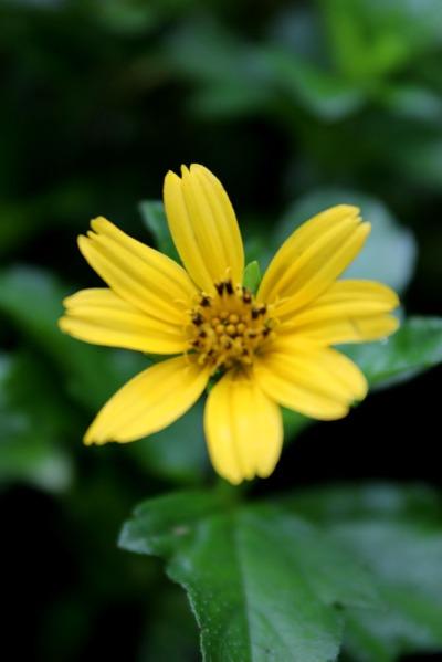 botanic 07