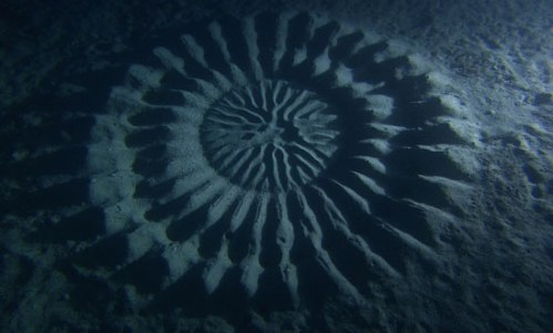 underwater-mystery-circle-6