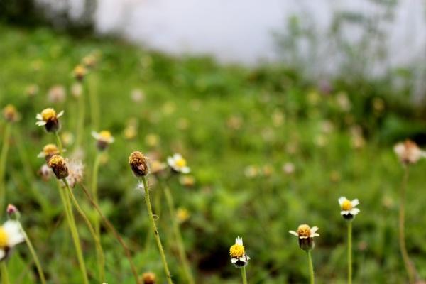 wild flowers  01
