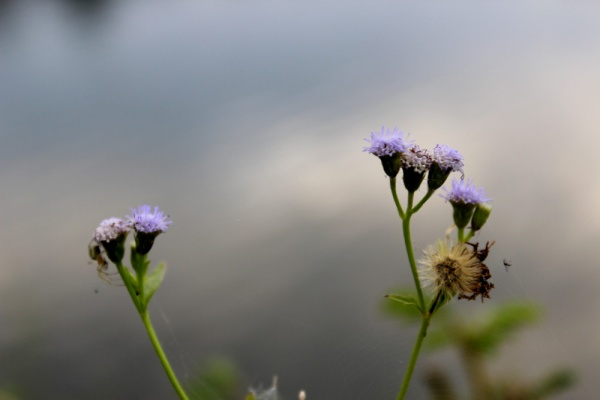 wild flowers  02