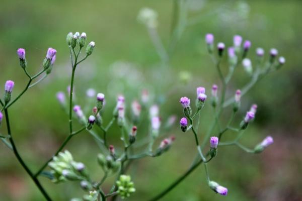 wild flowers 03