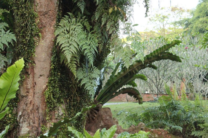 saga tree 04