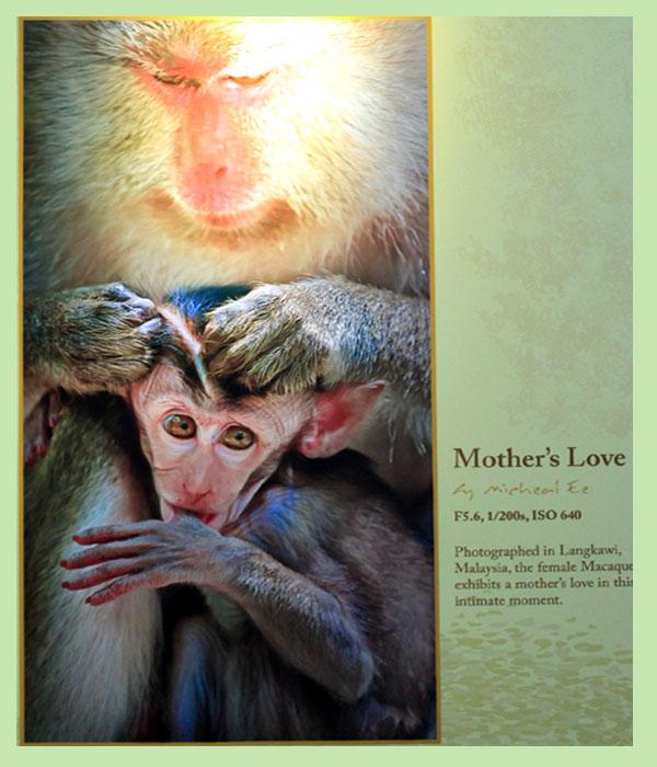 animal love 08