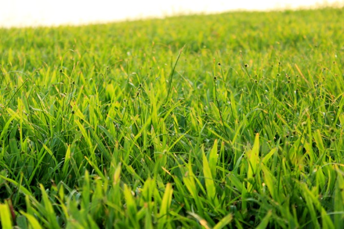 green green grass of home 08