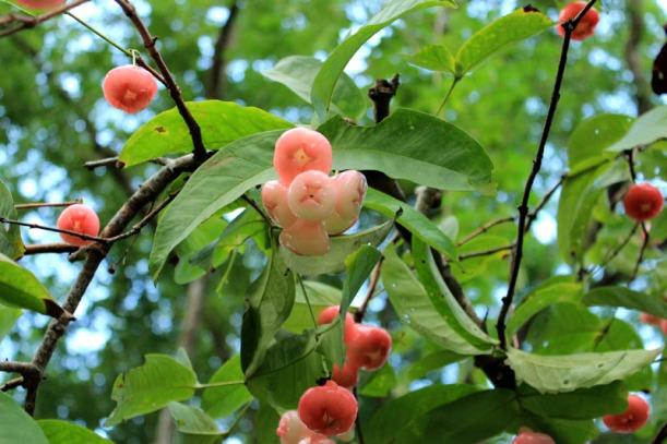 jumbos tree 02