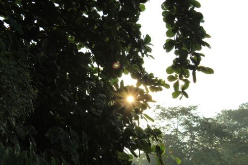 rising sun 02