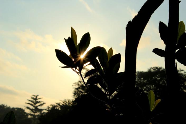 rising sun 03