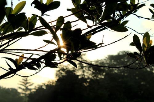rising sun 04