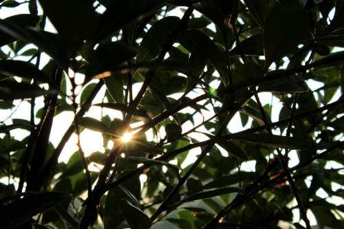 rising sun 05