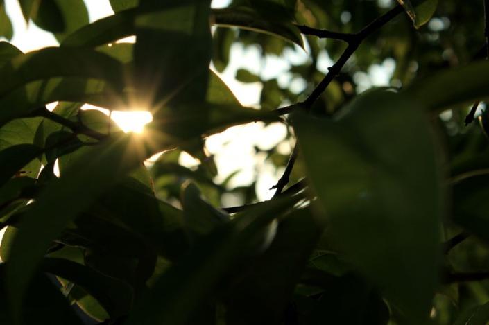 rising sun 07