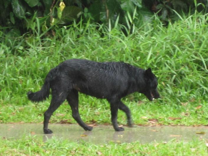 stray dog 02