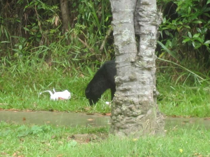 stray dog 05