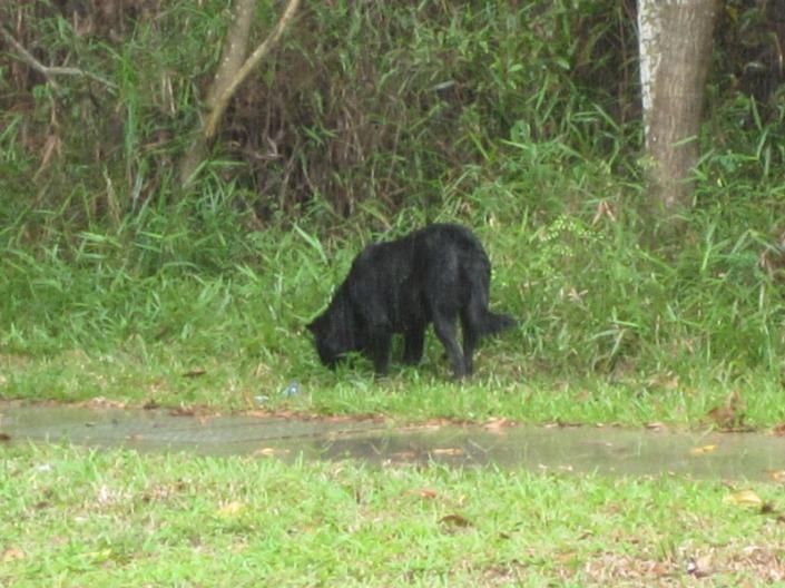 stray dog 07