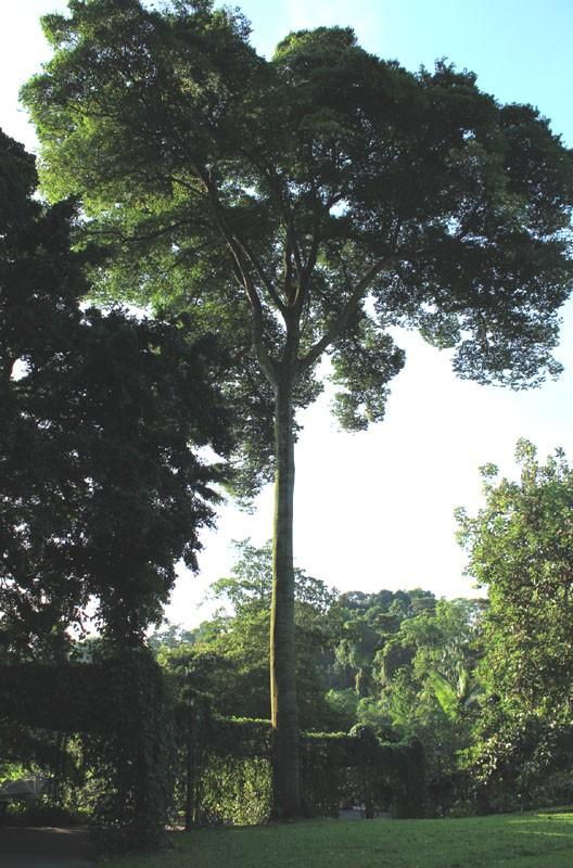 tree protector 01