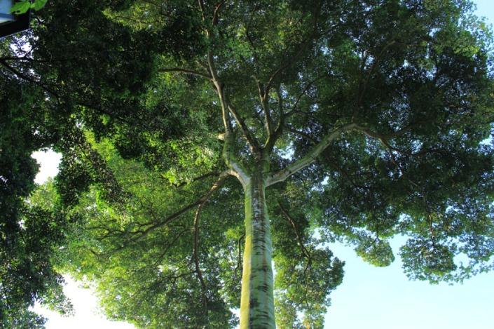 tree protector 02