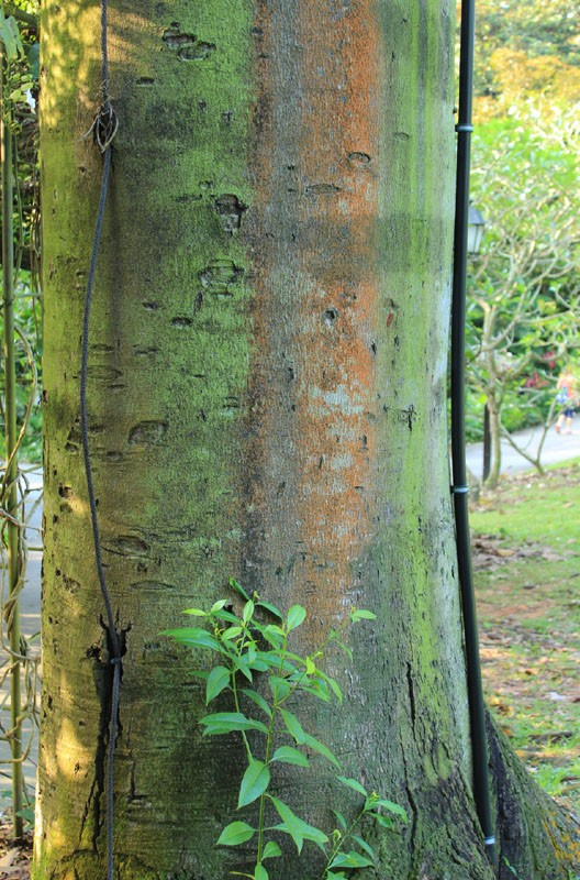 tree protector 04