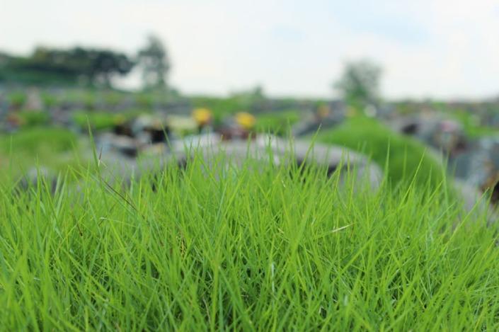 choa chu kang cemetery 04