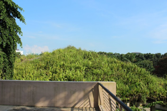 green roof 04