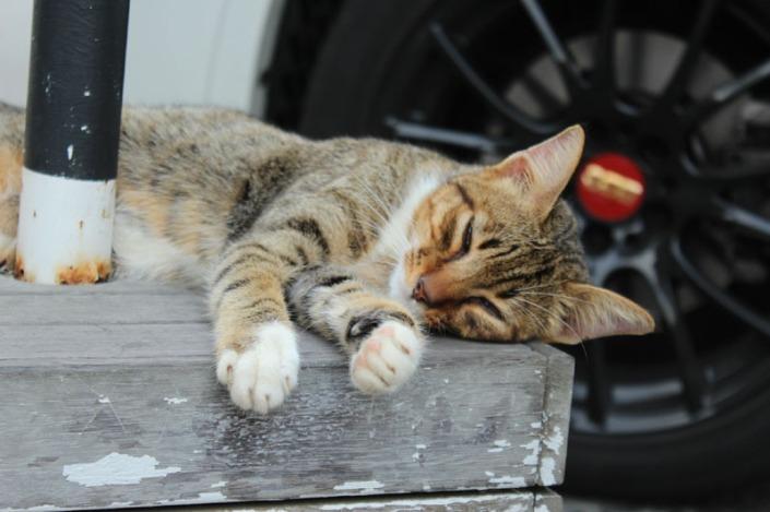 meow meow day 01