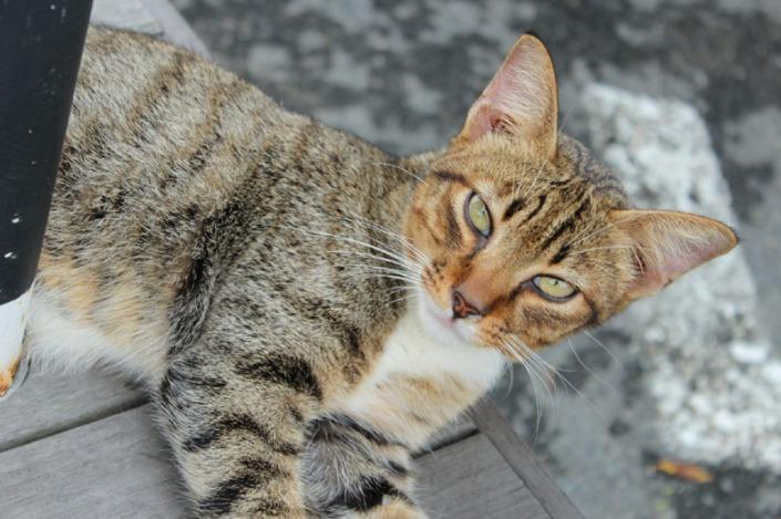 meow meow day 02
