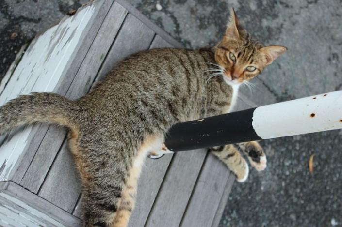 meow meow day 04