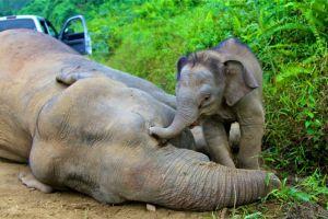 mom wake up 02 (www.freemalaysiatoday.com)