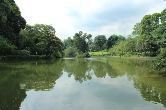 swan lake 01