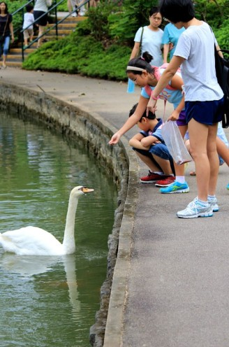 swan lake 08