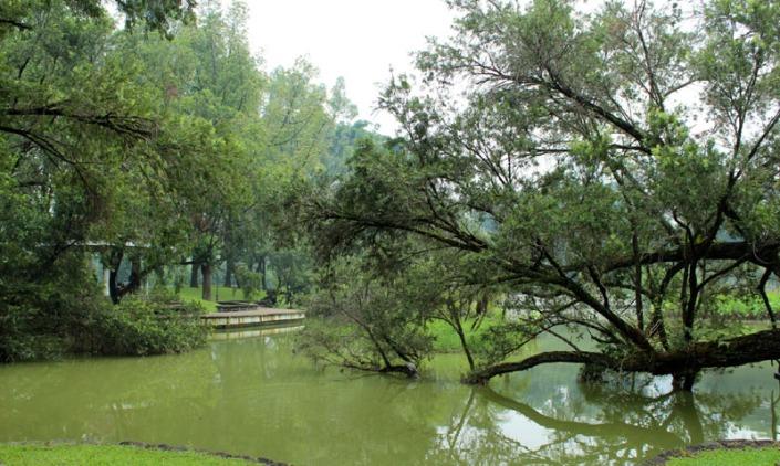 toa payoh garden 06