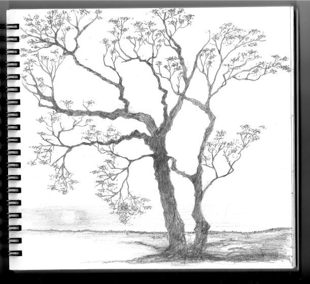 hand sketch 01