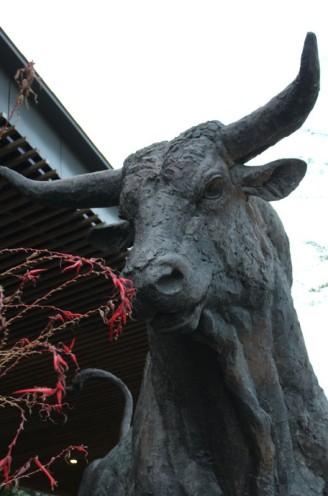 magnificent bull 02