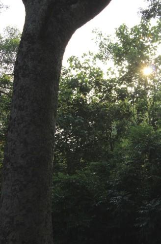 round tree 01