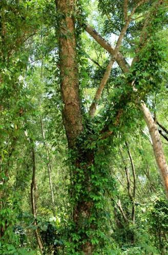 round tree 03
