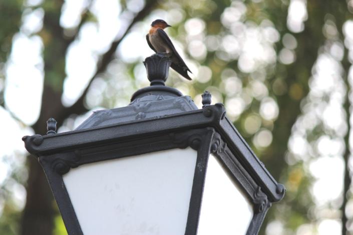 to u to sparrow 01