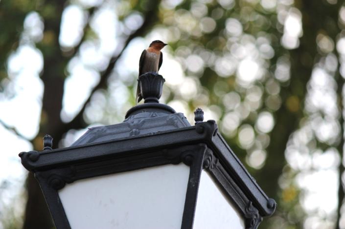 to u to sparrow 03