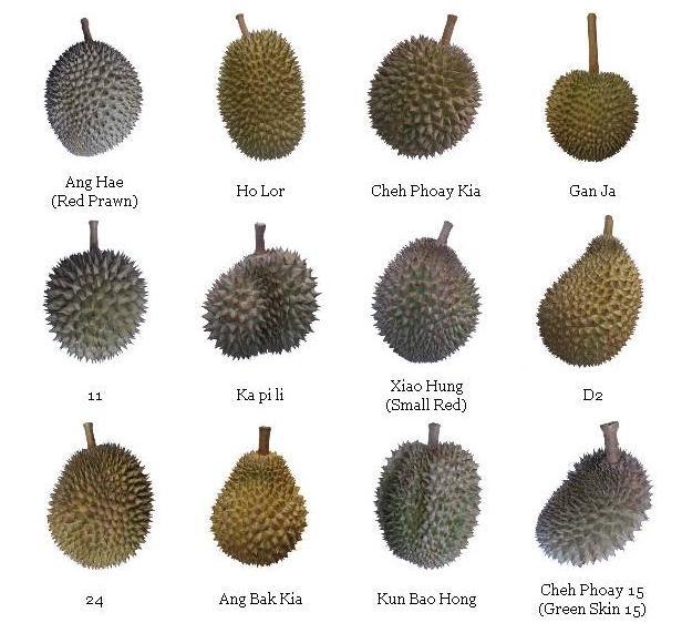 Durian Type
