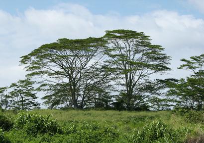 By courtesy of wildlifehawaii.com