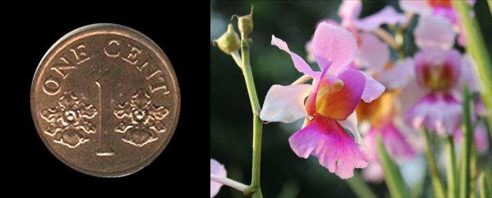 singapore coins 01
