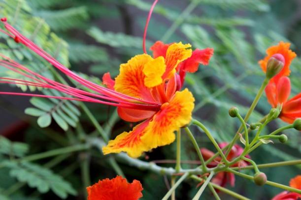 summer grow secret garden 01